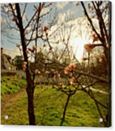 Spring Orchard In Williamsburg Acrylic Print