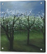 Spring Orchard Acrylic Print
