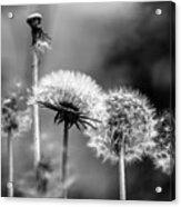 Spring Over... Acrylic Print