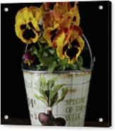 Spring Pansy Flowers In A Pail Acrylic Print