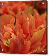 Spring Passion Acrylic Print