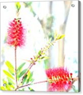 Spring Pastel Acrylic Print