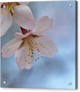 Spring Pastels Acrylic Print