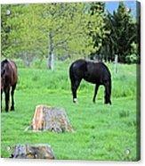 Spring Pastures Acrylic Print