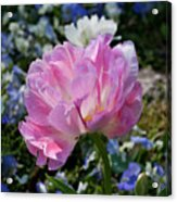 Spring Petals Acrylic Print