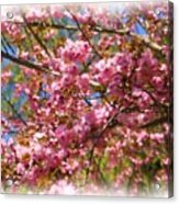 Spring Pink Blossoms Acrylic Print