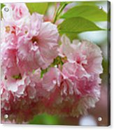 Spring Pink, Green And White Acrylic Print