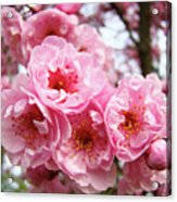 Spring Pink Tree Blossoms Art Prints Baslee Troutman Acrylic Print