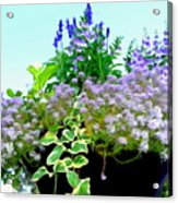 Spring Planter Acrylic Print