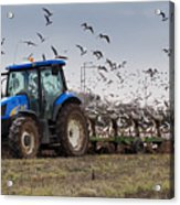 Spring Ploughing Acrylic Print
