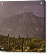 Spring Rain In The Sonoran  Acrylic Print