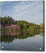 Spring Redbud Trees Acrylic Print