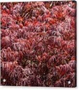 Spring Reds Acrylic Print