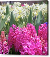 Spring Round Up Acrylic Print