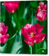Spring Series #28 Acrylic Print
