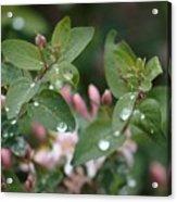 Spring Showers 5 Acrylic Print