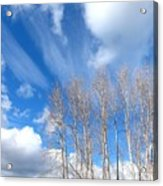 Spring Sky And Cotton Trees Acrylic Print