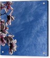 Spring Sky Acrylic Print
