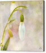 Spring Snowdrops And Bokeh Acrylic Print