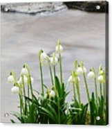 Spring Snowflake Acrylic Print