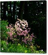 Spring Spotlight Acrylic Print