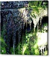 Spring Sprung  Acrylic Print