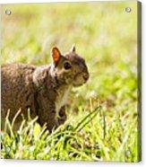 Spring Squirrel Acrylic Print