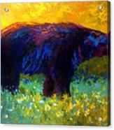 Spring Stroll - Black Bear Acrylic Print