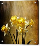 Spring Sun Acrylic Print by Lois Bryan