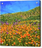 Spring Superbloom In Walker Canyon Acrylic Print