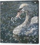 Spring Swan Acrylic Print