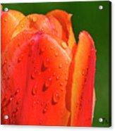 Spring Tears Acrylic Print