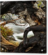 Spring Textures Acrylic Print
