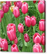 Spring Time Floral Tulips Galore Acrylic Print