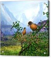 Spring Time Robins Acrylic Print