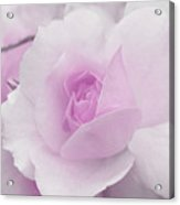Spring Time With Lavender Rose Acrylic Print