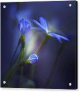 Spring Transitions Acrylic Print