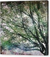 Spring Tree Acrylic Print