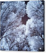 Spring Trees And Shadows Acrylic Print