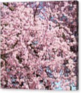 Spring Trees Art Prints Pink Springtime Blossoms Baslee Troutman Acrylic Print