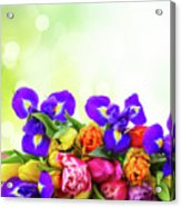 Spring Tulips And Irises Acrylic Print