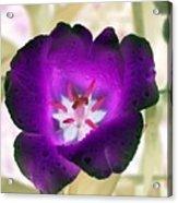 Spring Tulips - Photopower 3028 Acrylic Print