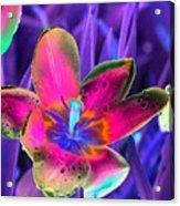 Spring Tulips - Photopower 3154 Acrylic Print