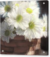 Spring White Daisies Acrylic Print by Melissa Herrin