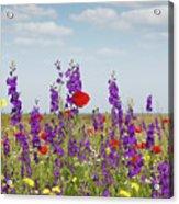 Spring Wild Flowers Meadow Acrylic Print
