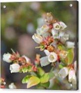 Spring Wildflower Acrylic Print