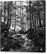 Spring Wood Acrylic Print