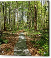 Spring Woods Acrylic Print