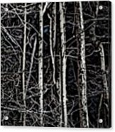Spring Woods Simulated Woodcut Acrylic Print
