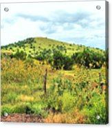 Springerville Sunflowers 0060 Acrylic Print